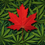 3 Canadian Marijuana Stocks With Reasonable Valuations